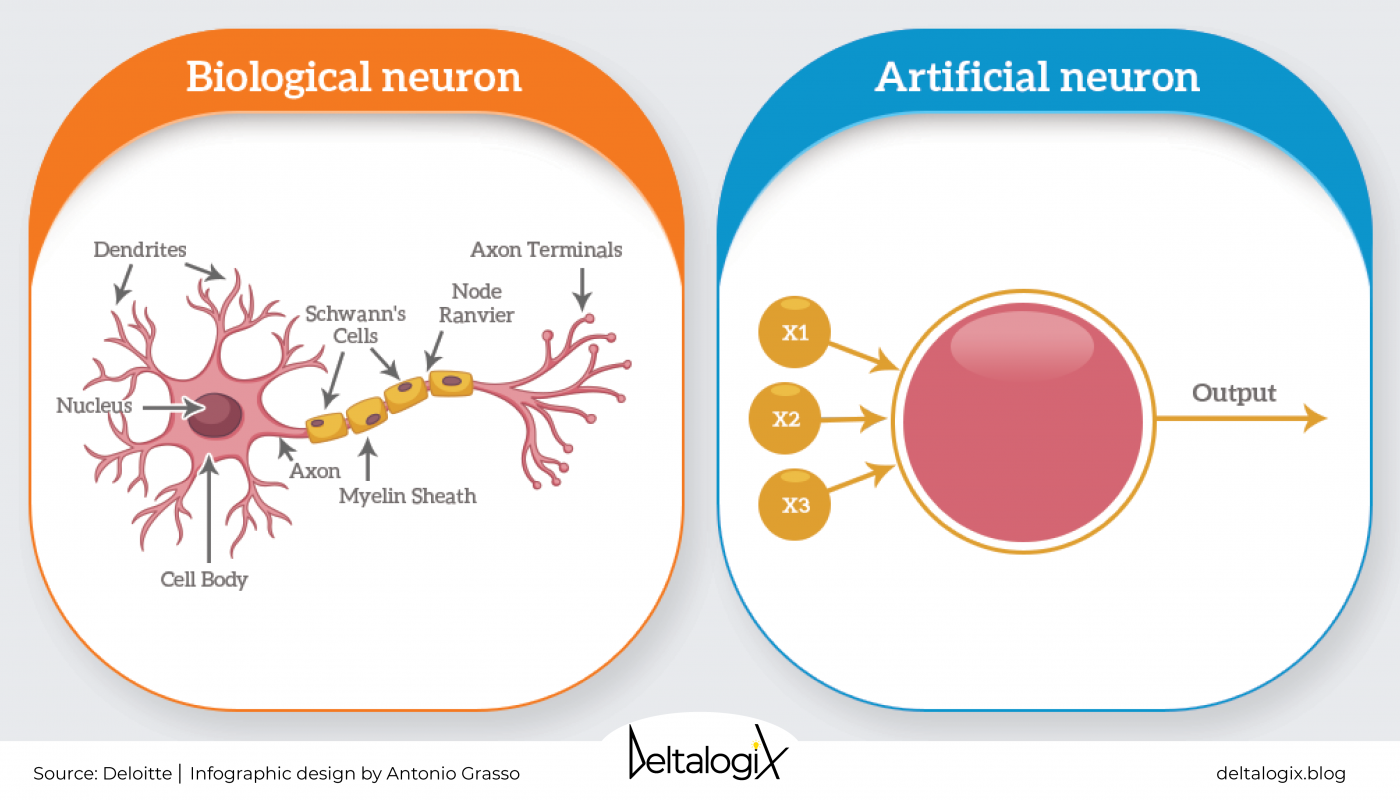 Biological and artificial neuron